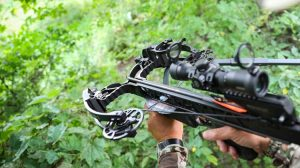Learn The Crossbow Basics with Brief Description